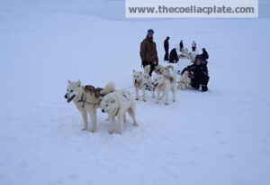 Dogsledding_optW